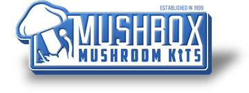 Mushbox Promo Codes